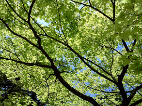 Photo: 国上寺。紅葉の新緑、大好き!