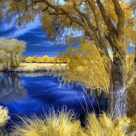 Infrared Lkae by Mark Bond - Digital Art Places ( sky, blue, yellow, tree, infrared, lake, 590nm )