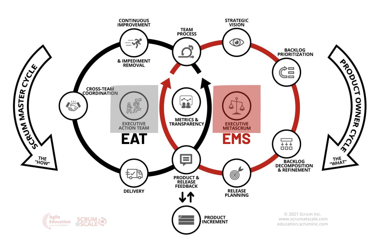 Im Zentrum des SM Zyklus ist das EAT, der PO Zyklus wird durch das EMS flankiert.