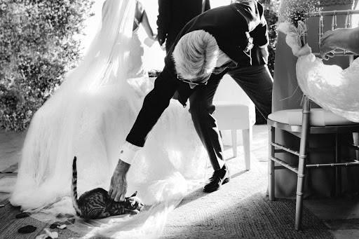 Свадебный фотограф Albert Pamies (albertpamies). Фотография от 12.02.2020