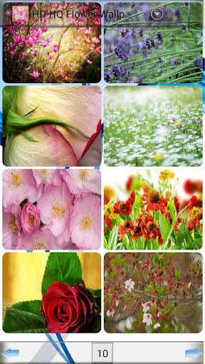 玩免費攝影APP|下載HQ高清壁紙花卉 app不用錢|硬是要APP
