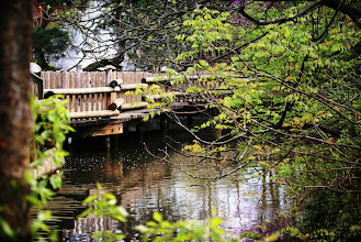 Photo: A wooden foot bridge over the swan lake