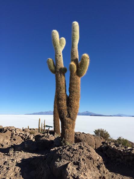 ウユニで日本人に有名な穂高ツアーでウユニ塩湖ツアー インカワシ島
