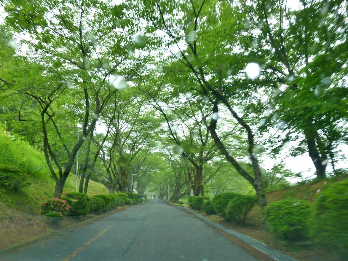 志津川高校旭桜坂 写真3