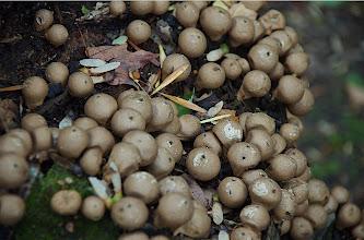Photo: Mushroms