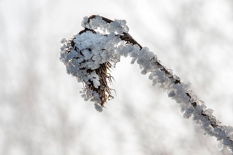 Ghiaccio biancoo brina  di SauroSantoni