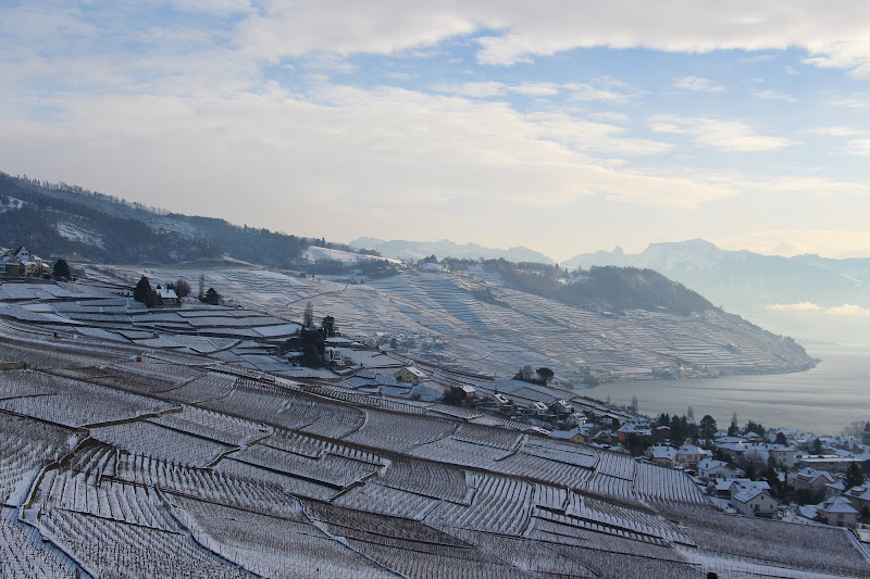 Neve sulle vigne di Marco Piccinini