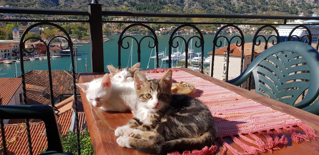 Kotor Kittens