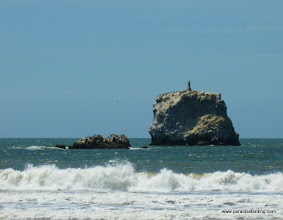 Photo: Virgin Rock, as seen from Peso Island, covered with Blue-footed Boobies, Brown Pelicans, and Neotropic Cormorants