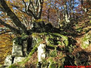 Photo: IMG_3969  i colori dell autunno sull appennino reggiano sul 607