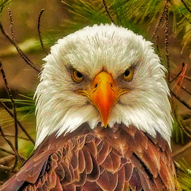 Mad Bird by Bruce Newman - Animals Birds ( eagle, dramatic, nature up close, portrait,  )