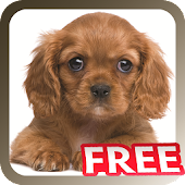 Pet Sitter: Pet Manager FREE