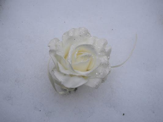 La rosa delle nevi di claudio_sposetti