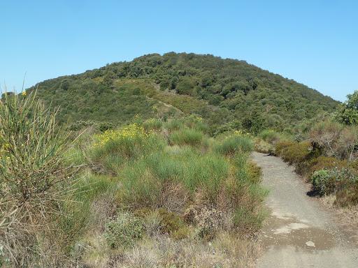 Puig d'en Cama