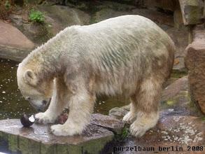 Photo: Knut kann sich nicht entscheiden ;-)