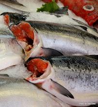 Photo: (Year 2) Day 339 - Yummy Salmon