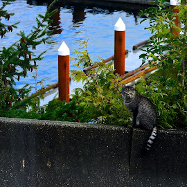 Waitin' for the Fish Boats by Campbell McCubbin - Animals - Cats Portraits ( concrete, cat, tabby, dock, water )