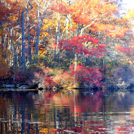 Fall in it's glory by Janet Smothers - Landscapes Waterscapes