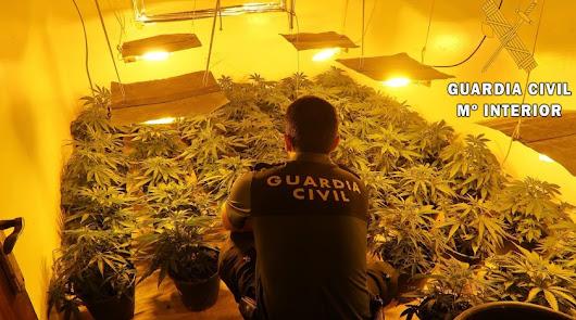 Hallan por segunda vez un cultivo de marihuana en la misma vivienda de Roquetas