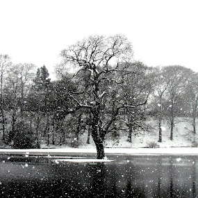 Lonely in the Snow by Andi Firdaus - Landscapes Weather ( snow, white, wheater, aberdeen, black, seaton, black and white, b and w, landscape, b&w, monotone, mono-tone )