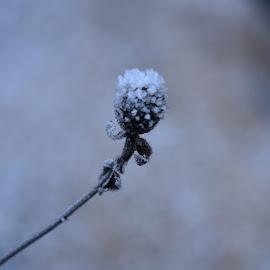 by Gigi Furtuna - Nature Up Close Other plants