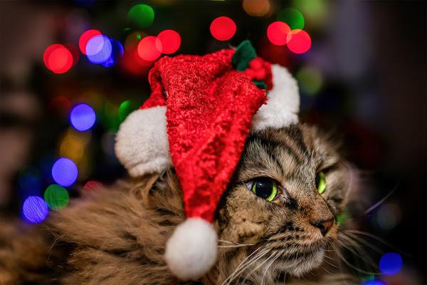 The Grinch's cat di Sara Jazbar