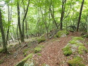 左下に林道が見えて