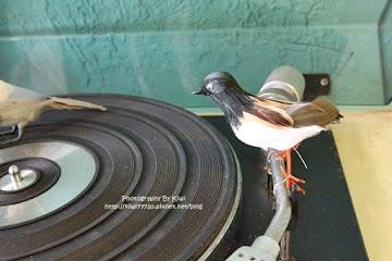 A bird一隻鳥brunch&teatime