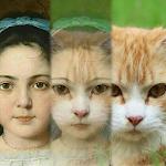 Zooface - GIF Animal Morph 1.3.8