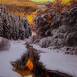 by Roald Heirsaunet - Landscapes Forests