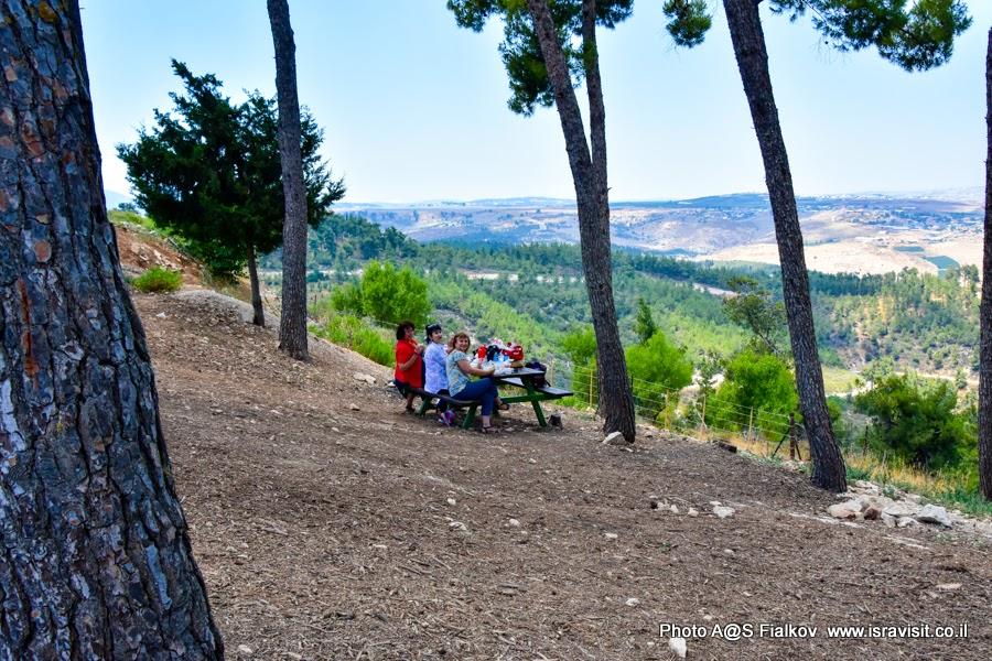 Лес Бирия. Пикник. Путешествия и экскурсии в Израиле.