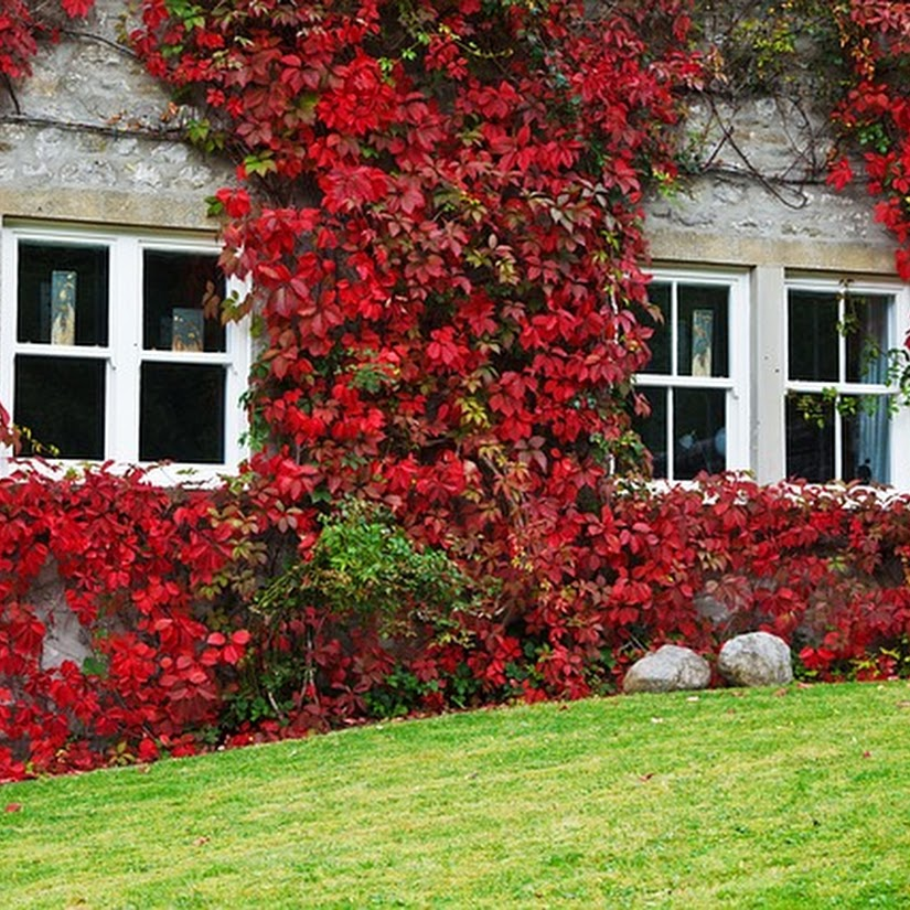 cuidado de plantas en otoño