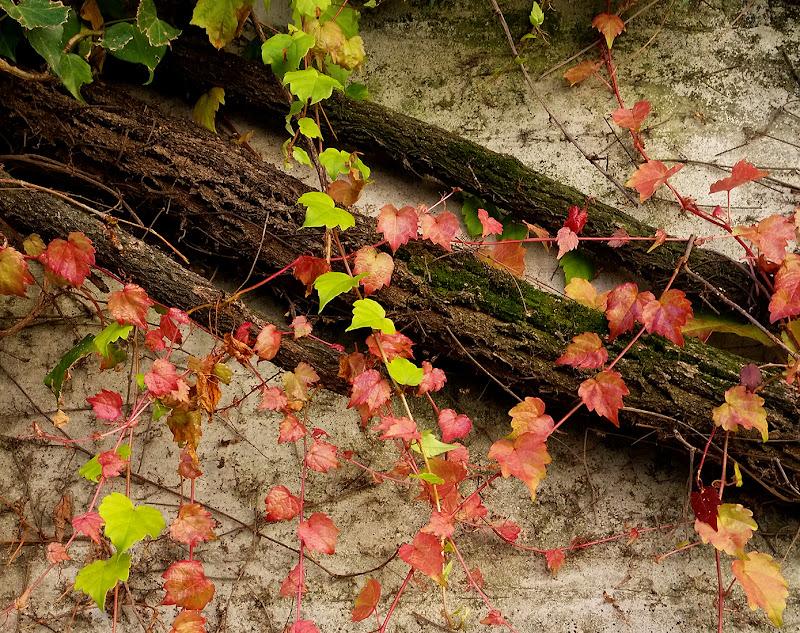 Ricami di primo autunno di mt antona