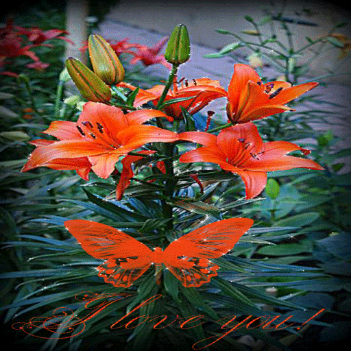 Lovely Red Flower LWP
