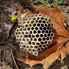 by Denise O'Hern - Nature Up Close Hives & Nests