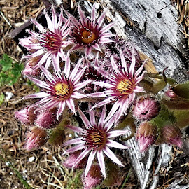 by Denise O'Hern - Nature Up Close Other plants