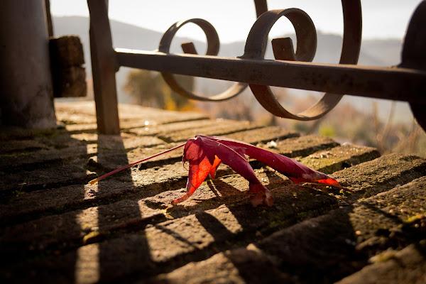 solitary leaf di SamaraMorgan