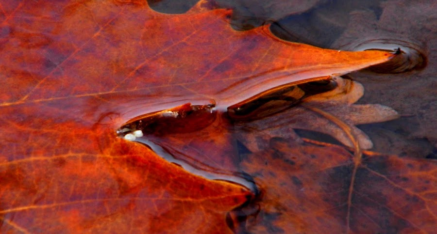by Chris Petty - Nature Up Close Leaves & Grasses ( fall leaves on ground, fall leaves )