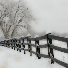 Fence in the Snow by Gwen Paton - City,  Street & Park  Neighborhoods ( white, snow, winter, colorado, fence,  )