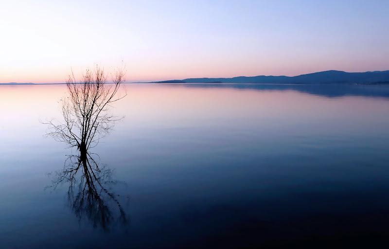 una solitudine che fa riflettere... di Carla Roganti