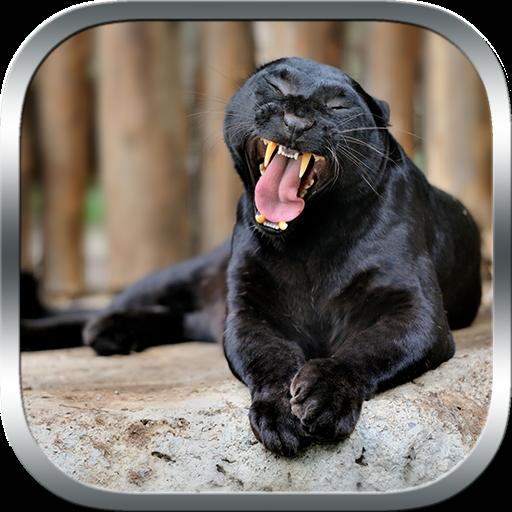 動作App|真实 豹 幼兽 模拟器 LOGO-3C達人阿輝的APP