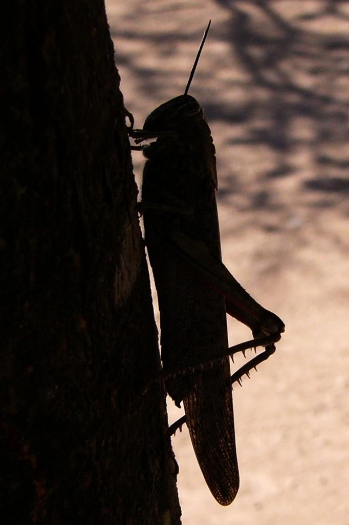 Sola e pensierosa di alberoblu