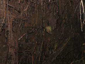 Photo: Mossy bird's nest in a tunnel along the trail