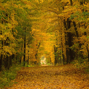 Lovers Lane by Reva Fuhrman - Landscapes Forests ( leaves fall trees greenery inviting,  )