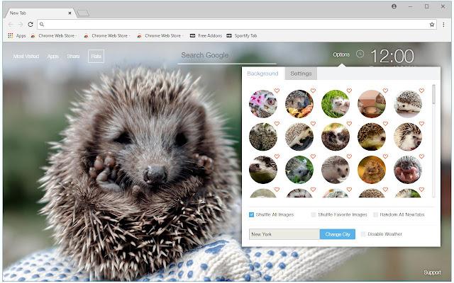 Hedgehog Wallpapers HD Cute Hedgehogs New Tab