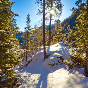 Rise to the Top by Evan Ludes - Landscapes Forests ( pines, hills, dakota, snowy, forest, landscape, sky, ponderosa, winter, blue, snow, south, trees, pine, black )