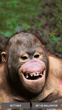 Funny Monkey Live Wallpaper By Free Wallpapers And Backgrounds Poster