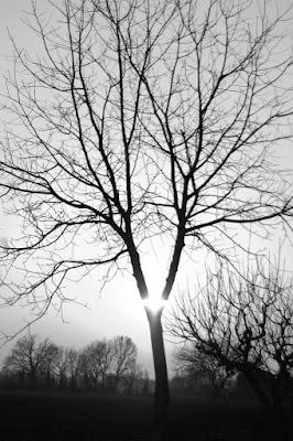 Shine tree! di Ambrogio95