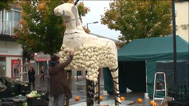 Photo: Giant Cauliflower Sheep