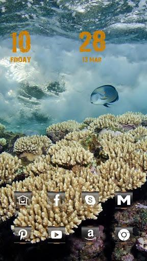 美丽海洋动物主题